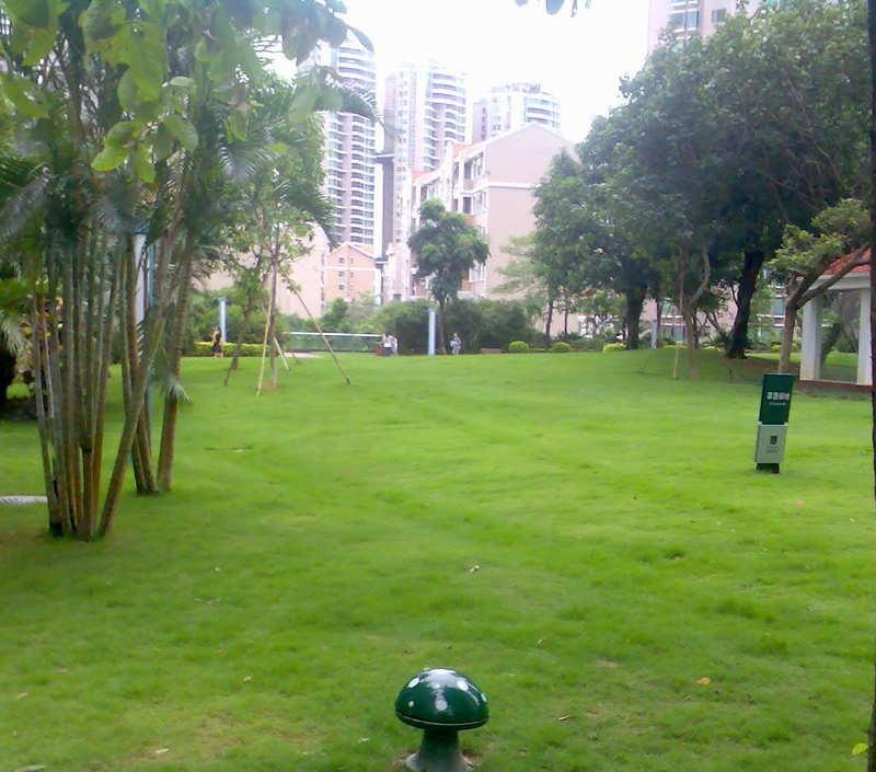 深圳新洲花园二期,新洲大厦