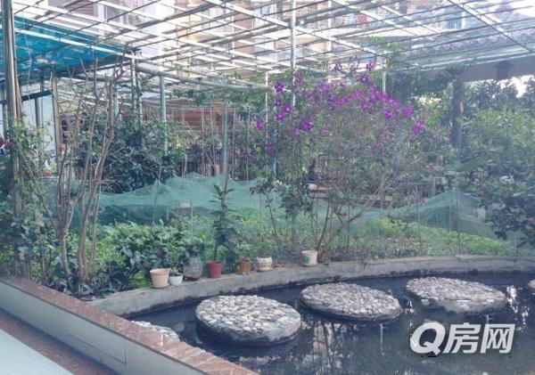 带300平花园 城市里的 农家小院 ,种有20多棵果